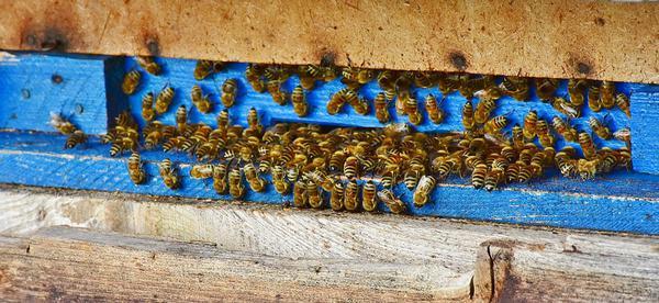 szybkie odymianie pszczół apiwarolem